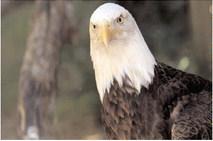 Birds of prey make for good bird-watching